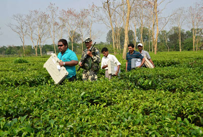 Election staff carry electronic voting machines through tea shrubs on their way to polling stations on the outskirts of the northeastern Indian city of Siliguri April 16, 2014. (Reuters)